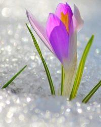 Музика і Весна…